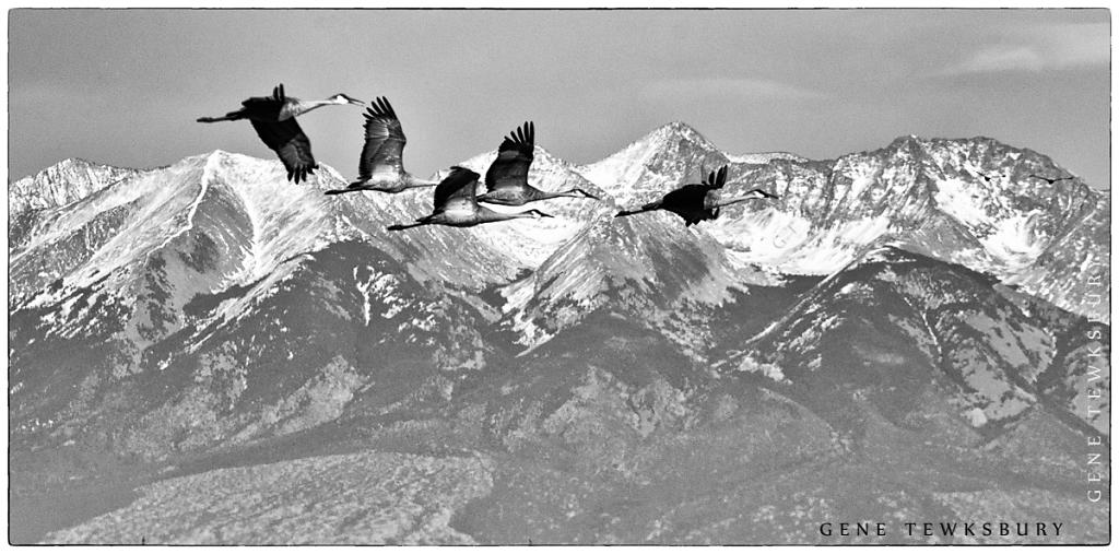 Cranes and Mountain Peaks