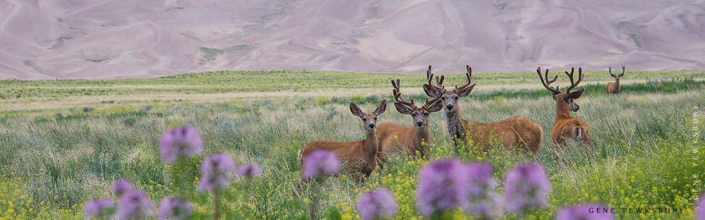Deer in field of flowers.